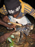 Measuring Coconut Crab